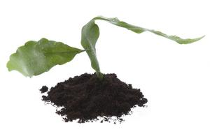 Comment stériliser Potting Soil d'une plante d'intérieur ?