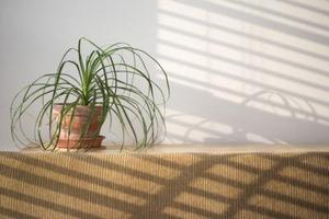 Comment se débarrasser de la moisissure sur le dessus de la terre des plantes d'intérieur