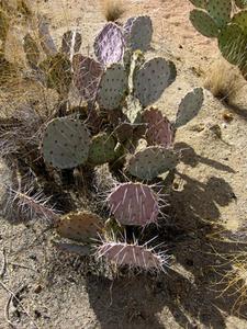 Plantes succulentes rustiques for Tous les plantes