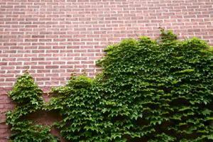 Comment planter de la vigne escalade - Comment planter un pied de vigne video ...
