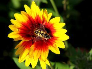 Comment se débarrasser des abeilles à miel à venir dans ma maison