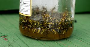 Plat fait maison savon abeille pi ge - Piege a guepe fait maison ...