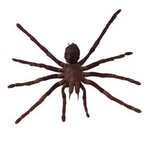 Grandes araignées errantes en Caroline du Sud