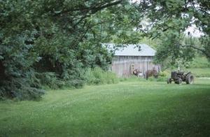 Idées d'aménagement paysager pour une pelouse entourée de bois