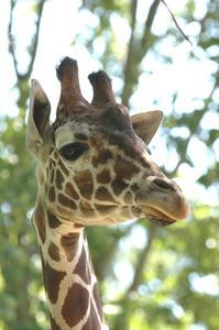 Comment faire un masque de girafe pour les enfants
