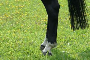 Traitement de la bursite chez le cheval