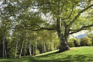 Comment utiliser les arbres pour prévenir l'érosion