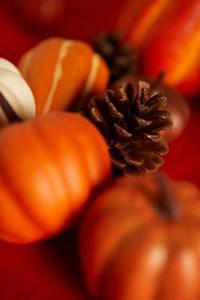 Populaire automne couleurs de mariage