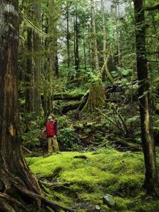 Effets des polluants atmosphériques sur la forêt tropicale