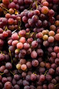 Quel genre de sol vignes aimez ?