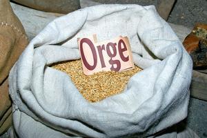 Quel genre de sol les vers de farine vivent-ils ?