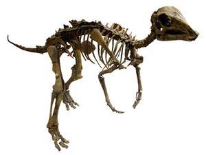Idées de Invitation anniversaire dinosaure