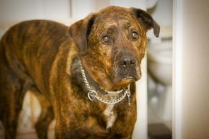Comment faire face à des chiens agressifs dans une communauté