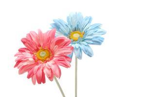 Fleurs pour les mariages Indiens