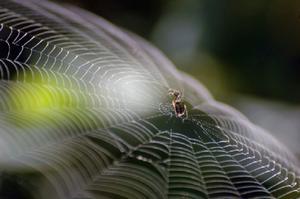 Comment faire pour empêcher les araignées dans un abri de jardin