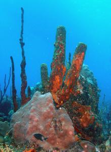 Comment faire un panneau d'affichage de récifs coralliens
