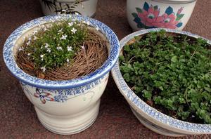Comment organiser les conteneurs de plantes