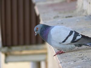 BRICOLAGE oiseau pointes