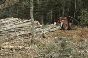 Les effets d'abattre des arbres sur l'écosystème