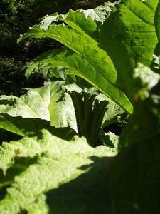 Plantes adaptés pour les sols gorgés d'eau