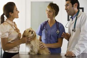 Conditions de démangeaisons de la peau chez les chiens