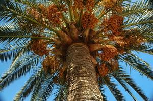 Matériel d'Extraction de l'huile de palme