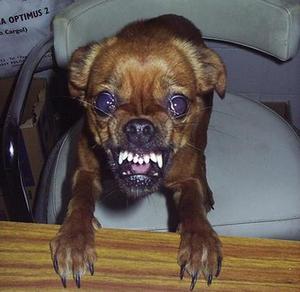 Médicaments pour chiens agressifs